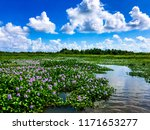 beautiful louisiana waterway...   Shutterstock . vector #1171653277