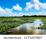 winding bayou through blooming...   Shutterstock . vector #1171657807