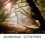 Path In An English Wood  ...