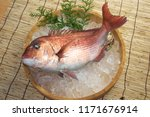 japan red sea bream is a name... | Shutterstock . vector #1171676914