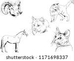set of vector drawings of...