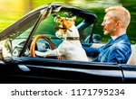 jack russell dog in a car close ... | Shutterstock . vector #1171795234