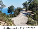 empty path through the pine... | Shutterstock . vector #1171825267