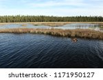a boreal lake wetland in late... | Shutterstock . vector #1171950127