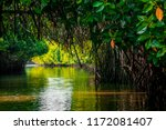 Mangrove Forest Reflection In...