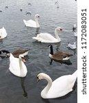 bevy of swans | Shutterstock . vector #1172083051