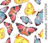 exotic butterflies wild insect... | Shutterstock . vector #1172223724