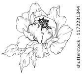 wildflower peony in a style... | Shutterstock . vector #1172231344