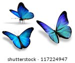 Three Blue Butterfly  Isolated...
