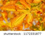 close up of dry leaf on... | Shutterstock . vector #1172331877