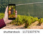 hand with phone on vineyard... | Shutterstock . vector #1172337574