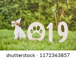Stock photo happy dog sitting in the park wearing party hat new year celebration greeting card concept 1172363857