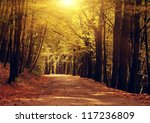 pathway through the bright... | Shutterstock . vector #117236809