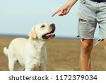 Stock photo young man with his lovely pet big white labrador outdoors with his owner man training his dog to 1172379034