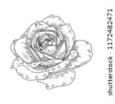 hand drawn engraving rose... | Shutterstock .eps vector #1172482471