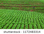 indonesian farmer work hard in... | Shutterstock . vector #1172483314