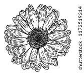 daisy in line art style ... | Shutterstock . vector #1172519314