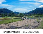 rice terraces and mountains.... | Shutterstock . vector #1172532931