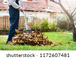 Man Collecting Fallen Autumn...