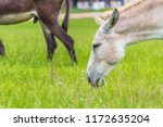 Mule is a mixed species of...