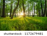 young spring grass at sunset... | Shutterstock . vector #1172679481