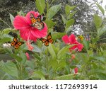 Butterflies Flowersthis Photo Includes Many - Fine Art prints