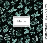vector hand drawn medical herbs ... | Shutterstock .eps vector #1172771791
