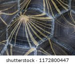 the shell of the critically... | Shutterstock . vector #1172800447