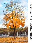 beautiful landscape with autumn ... | Shutterstock . vector #1172910571