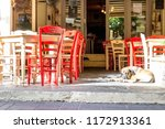 dog lying on pavement in... | Shutterstock . vector #1172913361