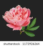 a picturesque peony flower....   Shutterstock .eps vector #1172926264