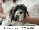 cute  adorable puppy dog held... | Shutterstock . vector #1172969371