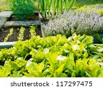 Lettuce  Herb Plants And Onion...
