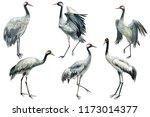 set of beautiful birds crane on ...   Shutterstock . vector #1173014377