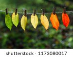 the autumn leaves transition... | Shutterstock . vector #1173080017