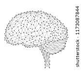 brain head human anatomical... | Shutterstock .eps vector #1173087844