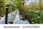 close up of irrigation beds in... | Shutterstock . vector #1173137824