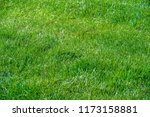 urban photography  a lawn is an ... | Shutterstock . vector #1173158881