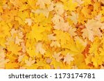 autumnal background  yellow... | Shutterstock . vector #1173174781