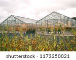 glass greenhouse in iceland | Shutterstock . vector #1173250021