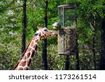 close up of head and neck of a... | Shutterstock . vector #1173261514