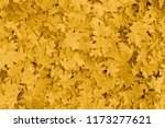 dry yellow foliage autumnal... | Shutterstock . vector #1173277621