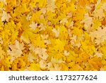 autumnal background  yellow... | Shutterstock . vector #1173277624