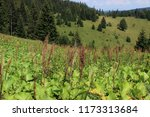 high altitude environment  ... | Shutterstock . vector #1173313684