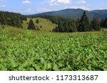 high altitude environment  ... | Shutterstock . vector #1173313687