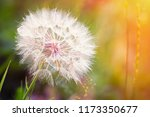 big dandelion on natural... | Shutterstock . vector #1173350677
