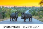 two rhinos standing on a road... | Shutterstock . vector #1173410614