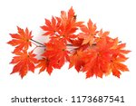 autumn maple leaves | Shutterstock . vector #1173687541