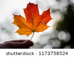 Holding Red Yellow Maple Leaf