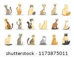 cat different breeds set  cute...   Shutterstock .eps vector #1173875011